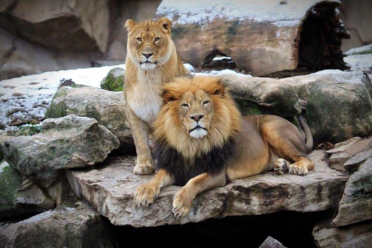 Zoologischer Park St. Louis