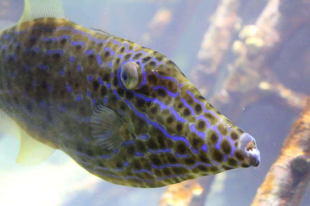 South Florida Science Center und Aquarium