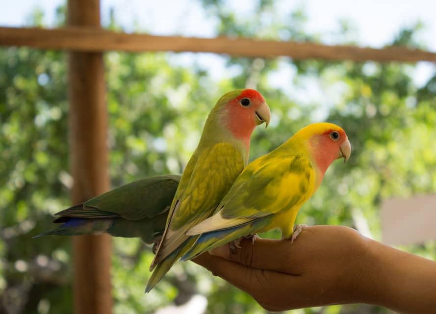 Cabo Animal Sanctuary Tour