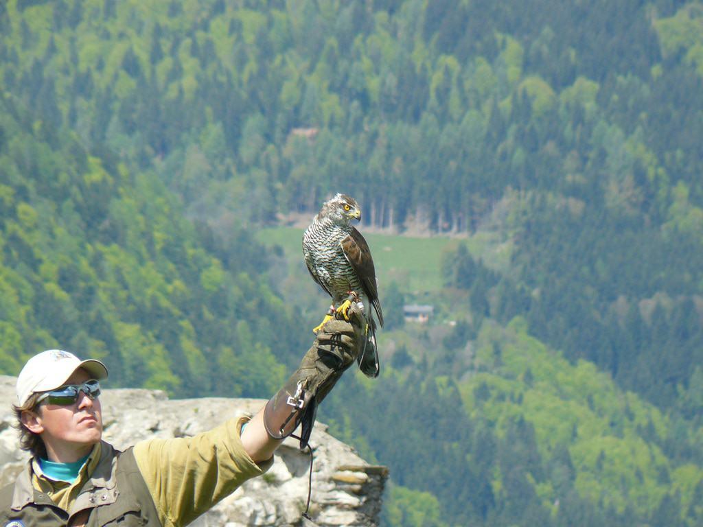 Landskron Castle Falcon