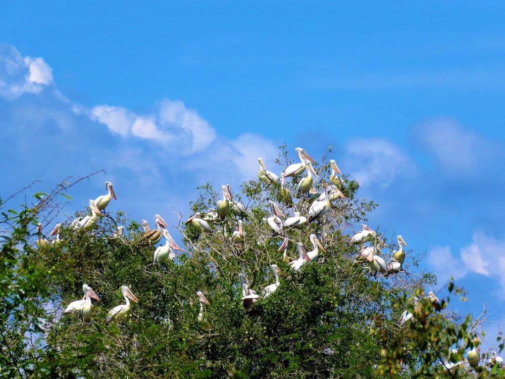 Prek Toal Vogelschutzgebiet