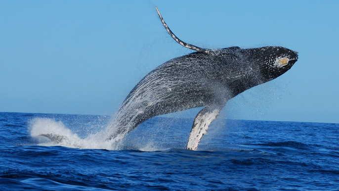 Walbeobachtungsabenteuer