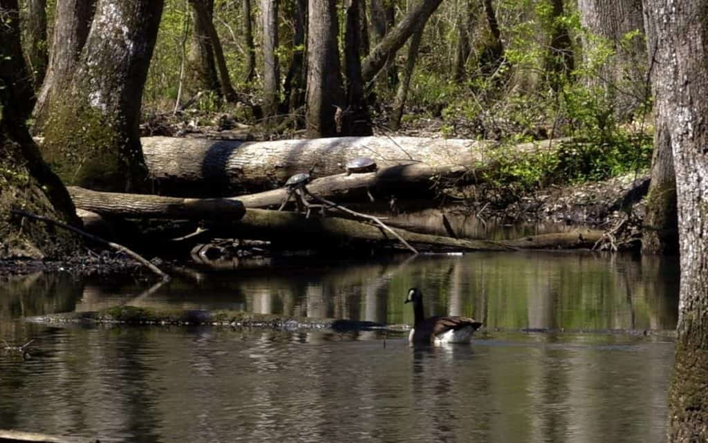 Ebenezer Swamp Ecological Preserve